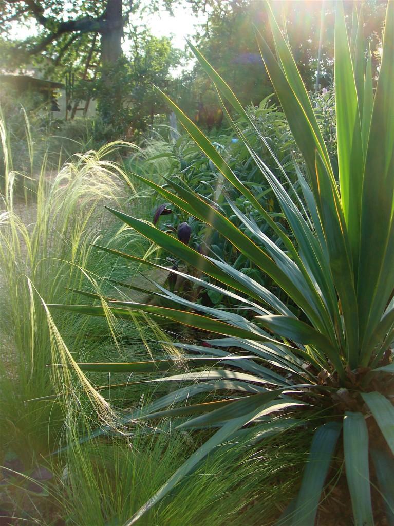 Contrasting foliage