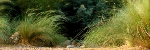 slider_feathergrasses